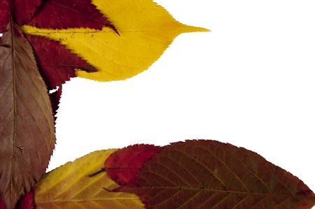 Autumn leafs isolated on a white background Stock Photo