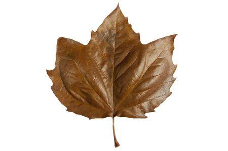 Automne feuilles isol�es sur un fond blanc Banque d'images