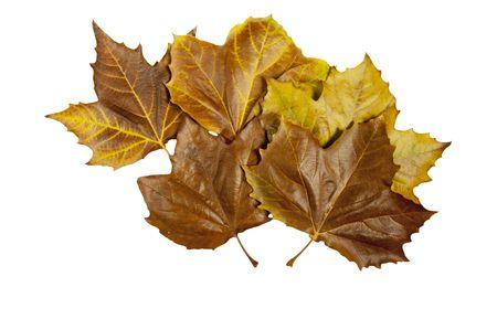 Automne leafs isol� sur un fond blanc Banque d'images