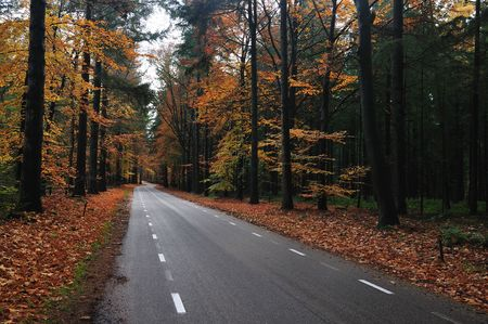 Nice country road  with beautiful autumn colors