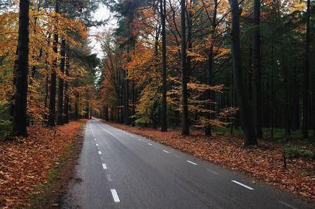 Route de campagne Nice avec belles couleurs automnales