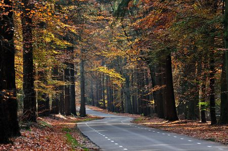 Une route de campagne bois�e � l'automne avec le feuillage color�.