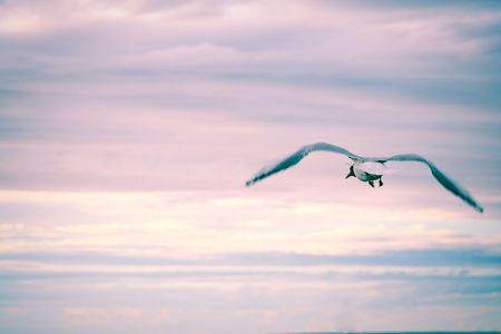 Sea-gull in the sky photo