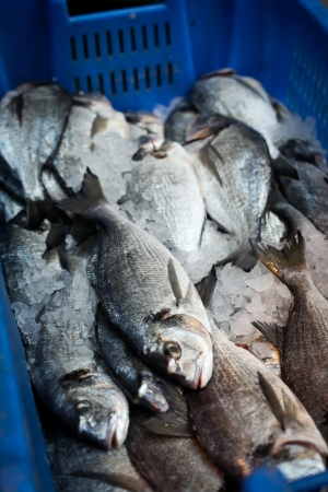 Close-up of fishes in a blue container at the food market  photo