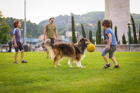 Father and two sons playing with a collie dog in the park