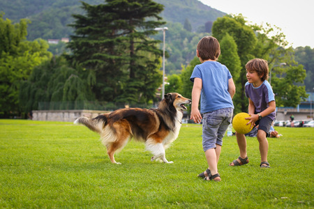 Two little boys playing with a collie dog with the ball in the park Stock Photo