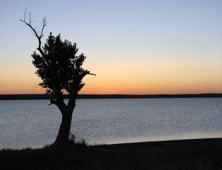 horrizon: Lonley Tree! Stock Photo