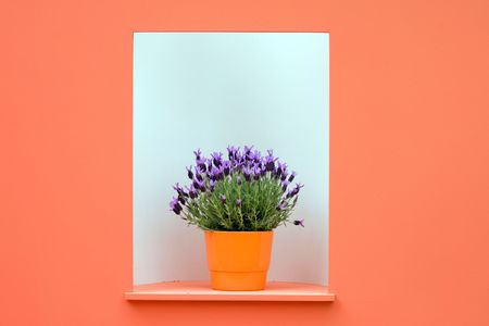 Flower pot with blue lavender in the orange and white wall frame. photo