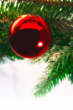Christmas decoration, red christmas balls on spruce branch Stock Photo - 8259836