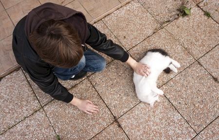 View from above on the boy caressing playful domestic cat. Stock Photo - 8329821