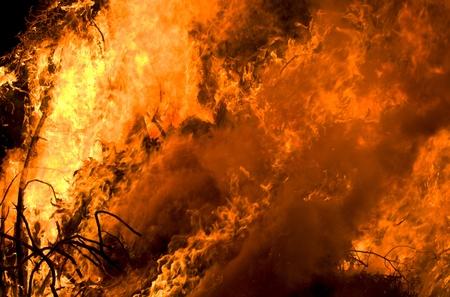 Close-up van het vuur van droog bos.