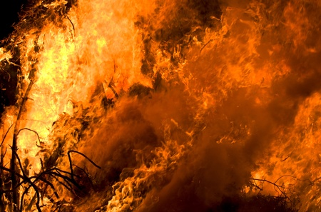Closeup of the blazing fire of dry forest. Standard-Bild