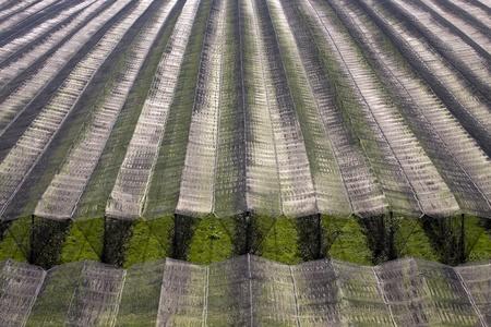 Orchard bedekt met beschermende net.