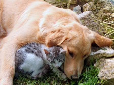 dog cat: Best friends