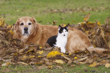 lying on leaves: Cat and dog lying in the autumn leaves  Stock Photo