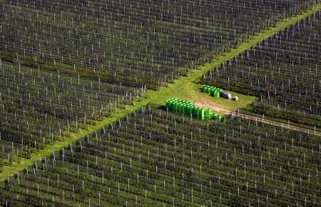 View on the vineyards from above. photo
