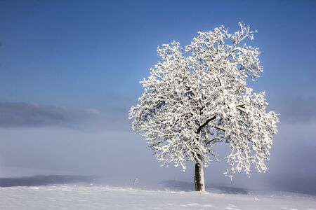 Beautiful winter landscape with lonely tree.