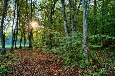 Beautiful sunrise in the green summer forest.