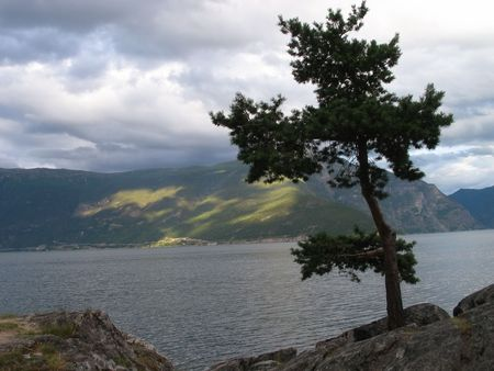 brink: lonely pine on brink of a fiord Stock Photo
