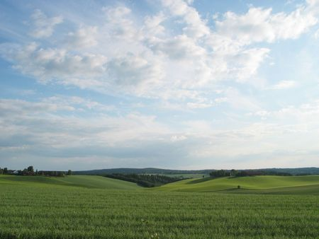openspace: green meadow and lue sky