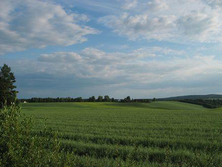 openspace: green meadow