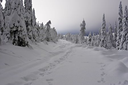 desertion: hares traces on snow forest road