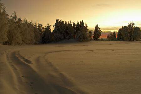 gloaming: sunset in the snow forest field