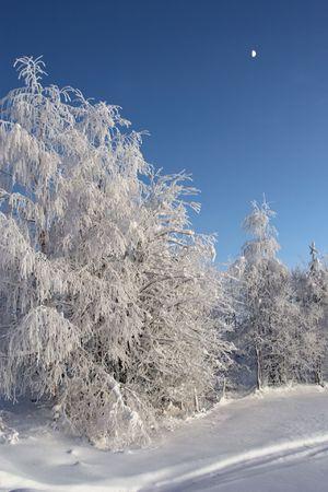 white snow forest under evening sky photo