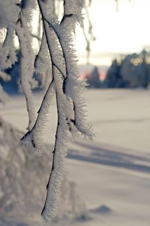 snow crystals on the branch with sunset forest background Stock Photo - 356994
