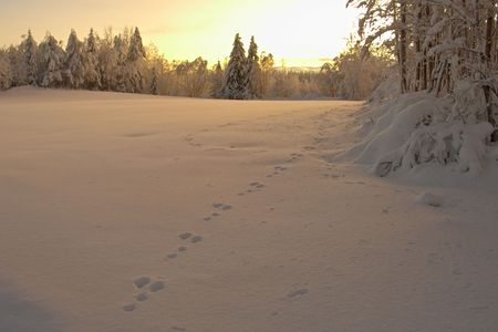 gloaming: hares traces on snow Stock Photo