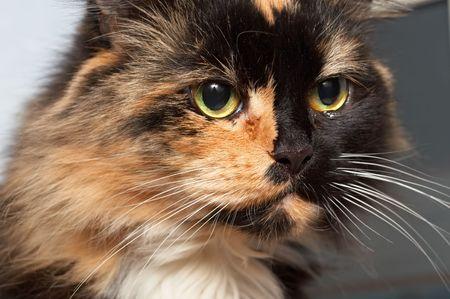 catlike: Sad crying cat Stock Photo