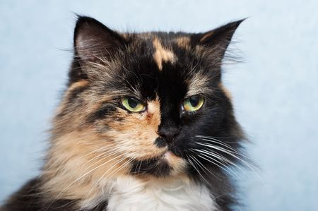 catlike: The sad cat looking at right