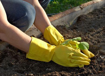 garden work - spring planting Stock Photo - 445250
