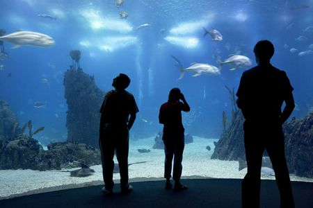 people silhouettes on aquarium background in Lisbon oceanarium photo