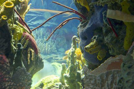 beenderige: onderwater kleurrijke planten en koralen