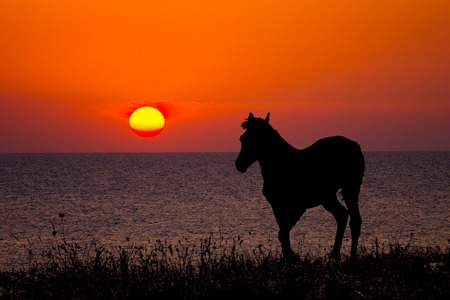 silhouette of a horse on sea sunset background