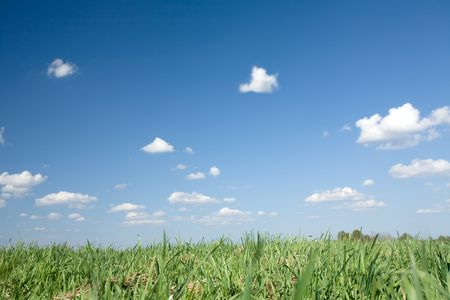 backcloth: beautiful meadow with green grass on cloudy blue sky background
