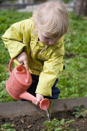 little girl watering strawberry in the garden