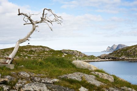 big dry tree on norwegian fjord and cloudy sky background photo