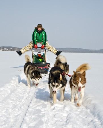 man in dog sledding travel across snow field Stock Photo