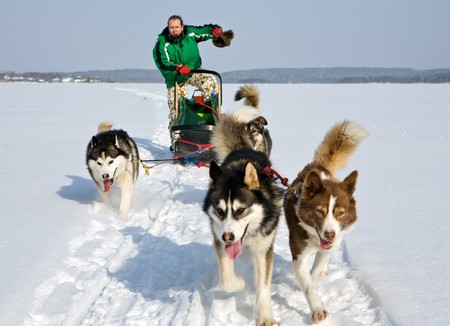 dog sled: man in dog sledding travel across snow field Stock Photo