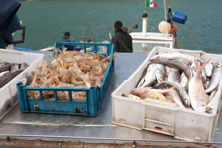 haul: closeup of sea haul: boxes with fish and langoustes