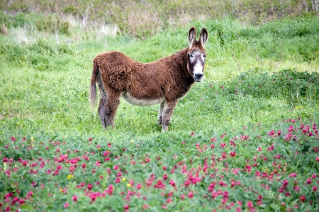 big ass: big donkey standing sideways in the beautiful green meadow with flowers and looking to the camera Stock Photo