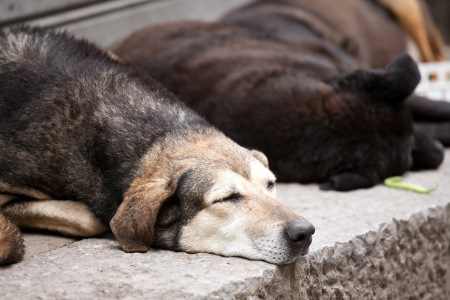 closeup of snout of sleeping stray dog on a street pavement photo