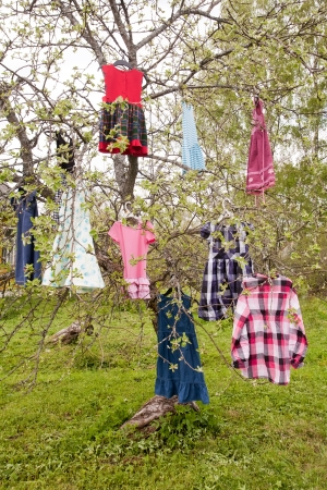wizardry: tree with girls colored dresses hanging on branches Stock Photo