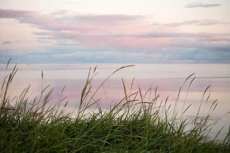 sea grass: tender scenic sunset on the coast of the Northern sea Stock Photo