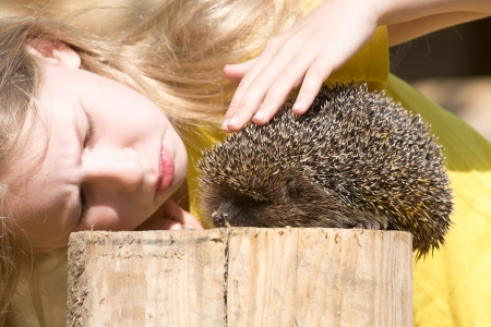 gratify: little girl looking at funny hedgehog, side view