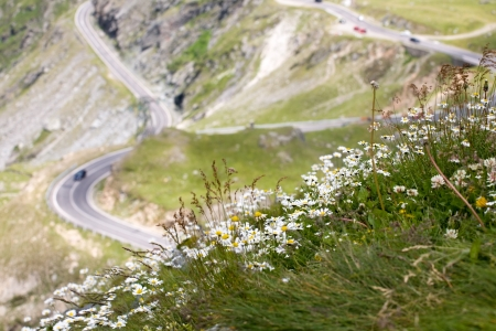 rumania: scenic view of mountain road with camomiles foreground