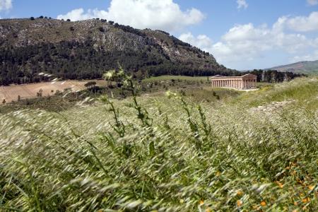 templo romano: paisaje de verano con el antiguo templo romano de Venus, Segesta pueblo, Sicilia, Italia