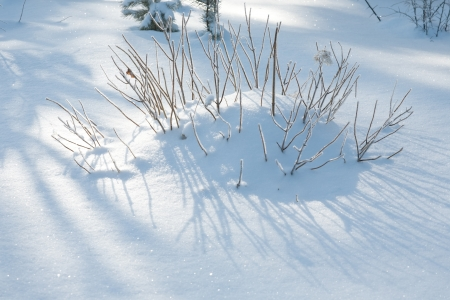snowdrift: funny hedgehog from snowdrift and bush twigs